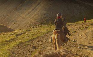 header-main-horse