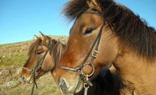 horseback-riding-sh-34